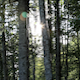 Backlight Forest - VideoHive Item for Sale