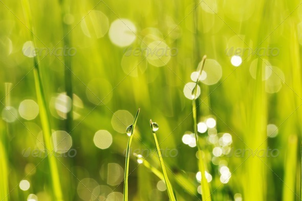 Morning grass - Stock Photo - Images