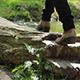 Walking on Tree Bridge - VideoHive Item for Sale