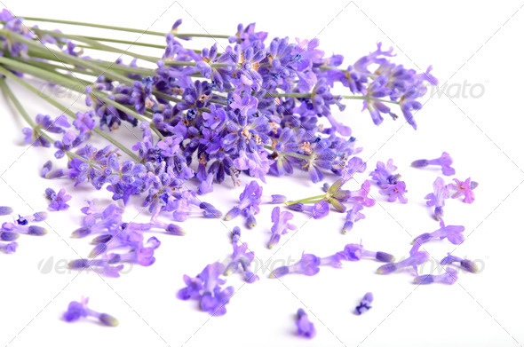 Bunch of lavender - Stock Photo - Images