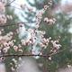 Tree Flowers In Rain 9 - VideoHive Item for Sale