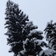 Snow And Fir Trees In The Mountain In Winter - VideoHive Item for Sale