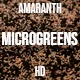 Microgreens Amaranth 1 - VideoHive Item for Sale