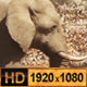 Elephant in a Group of Animals - VideoHive Item for Sale