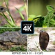 Reptiles filmed in close-up in South Africa in kruger park 8 PACK CLIP 4K - VideoHive Item for Sale