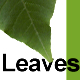 Set Of Leaves - GraphicRiver Item for Sale