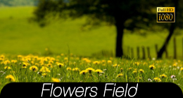 Flower Field Collection