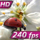 Ladybird and Spring Rain - VideoHive Item for Sale