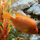 Fish Swimming in Aquarium (Pack of 8 Videos) - VideoHive Item for Sale