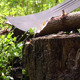 Chopping Wood With Machete In Forest - VideoHive Item for Sale