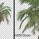 Breezy Palm Tree Vol3 - Alpha Channel - VideoHive Item for Sale