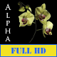 Orchid - VideoHive Item for Sale
