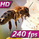 Pollination - VideoHive Item for Sale