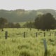 Green Fields With Cows - VideoHive Item for Sale