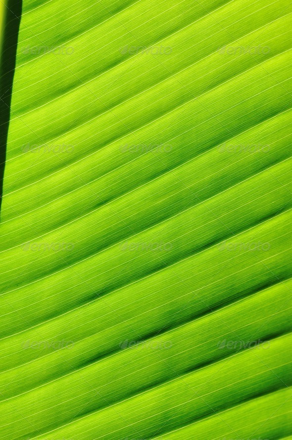 Palm tree leaf background - Stock Photo - Images