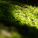 Moss On Tree - VideoHive Item for Sale