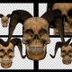 Horned Human Skull Transitions - VideoHive Item for Sale