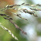 Grass At The Wind - 08 - VideoHive Item for Sale