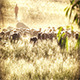 Sheep With Shepherd - VideoHive Item for Sale
