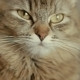 Face of a Cat - VideoHive Item for Sale