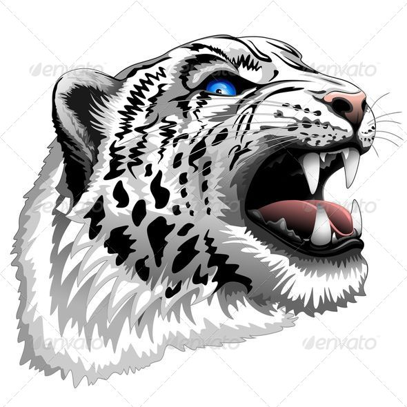 Snow Leopard Roar - Animals Characters