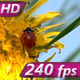 Ladybird and Dandelion - VideoHive Item for Sale