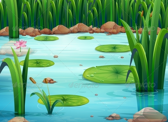 Pond with Lilly Pads by interactimages  GraphicRiver