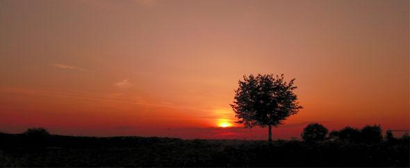 Tree vh 590