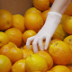 Oranges - VideoHive Item for Sale