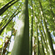 Bamboo - VideoHive Item for Sale