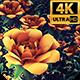 Flower Field Loop 4k - VideoHive Item for Sale