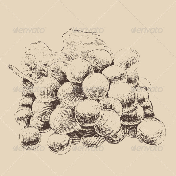Bunch of Grapes Vintage Illustration, Engraved  - Food Objects