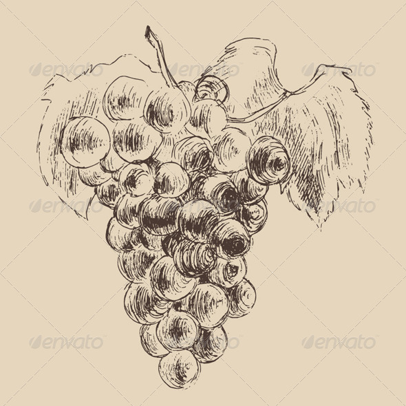 Bunch of Grapes Vintage Illustration, Engraved Ret - Food Objects