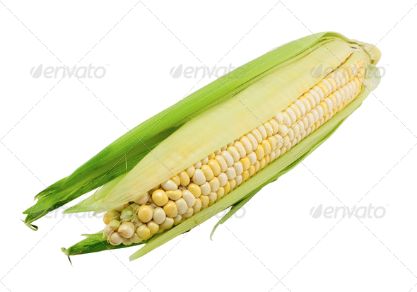Fresh corn - Stock Photo - Images