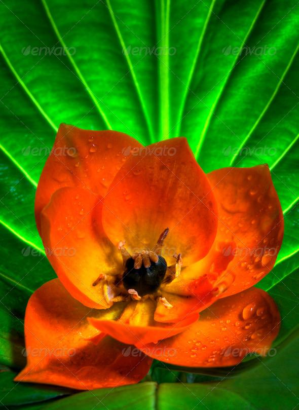 Sun Star Flower - Stock Photo - Images
