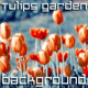 Flowers in Garden with Indigo Background - VideoHive Item for Sale