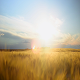 Sunset Field - VideoHive Item for Sale