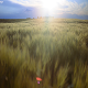 Sunset Field 2 - VideoHive Item for Sale