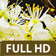 Plum Flower  - VideoHive Item for Sale