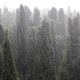 Heavy Rain in Forest - VideoHive Item for Sale