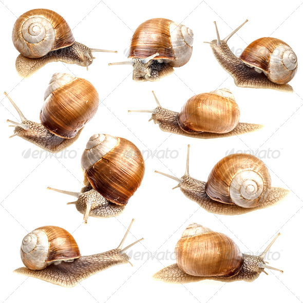 Snail collection - Stock Photo - Images