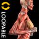 Muscle Map - Female Runner - Loop - VideoHive Item for Sale