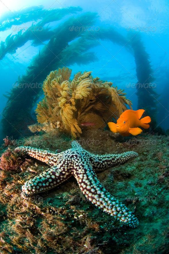 Ocean reef scenery - Stock Photo - Images