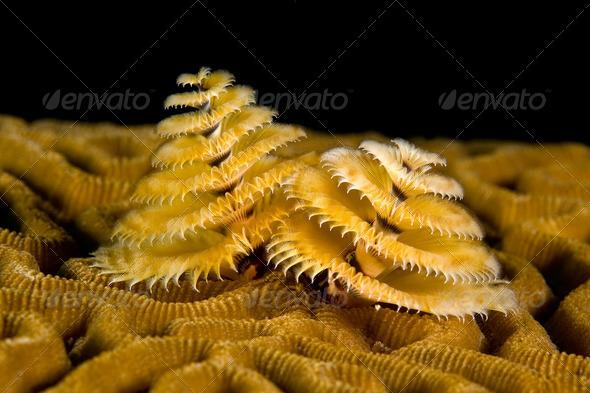 Marine worm - Stock Photo - Images