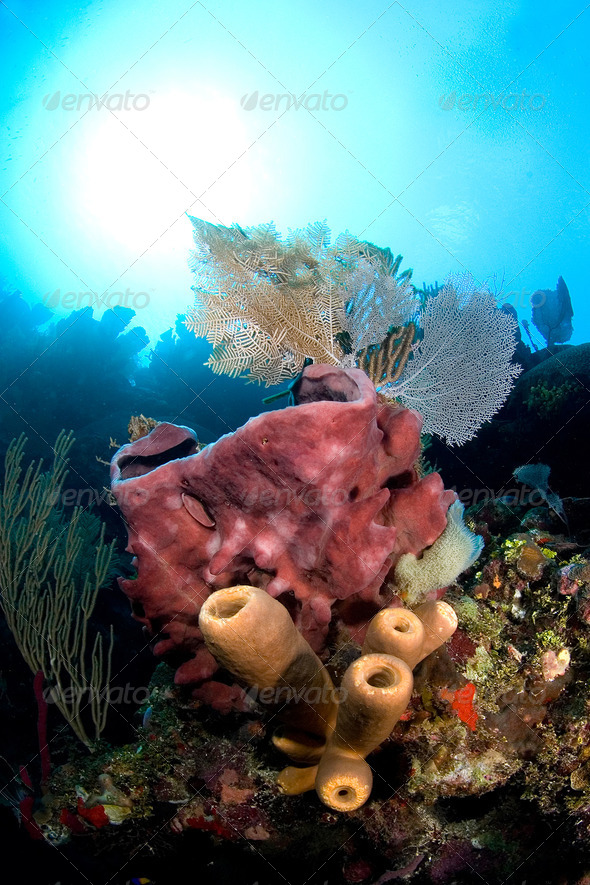 Tropical reef - Stock Photo - Images