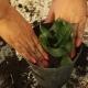 Put Soil In Pot 4 - VideoHive Item for Sale