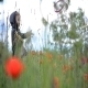 Boy Playing in the Chain of Poppies 01 - VideoHive Item for Sale