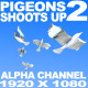 Pigeons Shoots Up - VideoHive Item for Sale