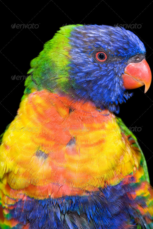 Tropical bird - Stock Photo - Images
