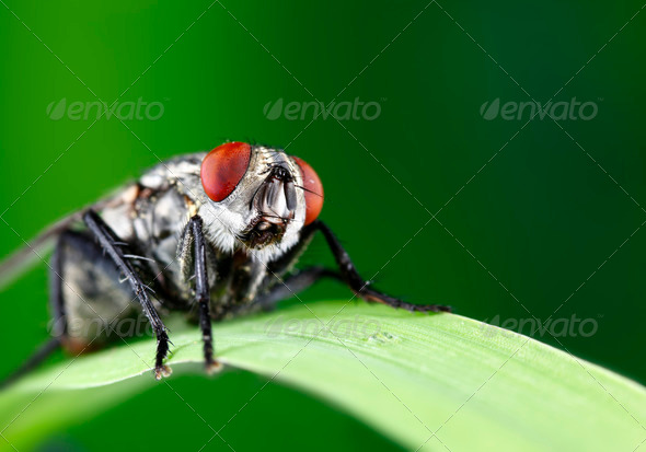 Fly - Stock Photo - Images